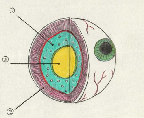 more eye