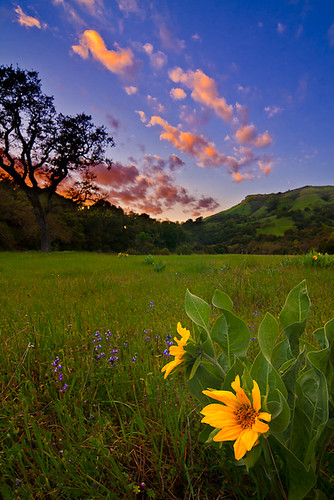 Sunol Dream by Clay Carey (in the mojave desert)