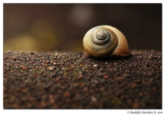 """Time and Patience would bring the snail to Jerusalem."" -Irish Proverb"