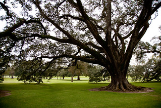 Oak trees at Oak Alley Plantation
