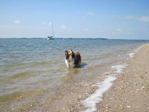 Bailey also likes wading in the Bay