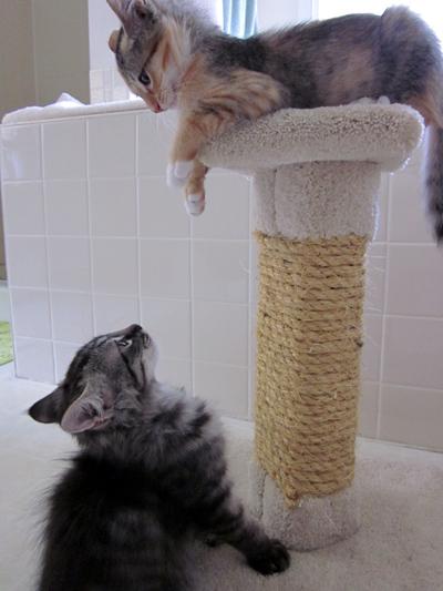 siblings-quarrel
