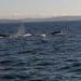 41 whale