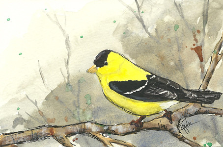 20110616_goldfinch