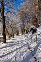 Chemin en forêt sous la neige