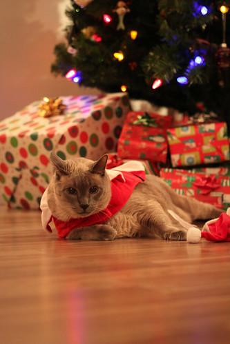 Santa Cats (Xmas 2010)