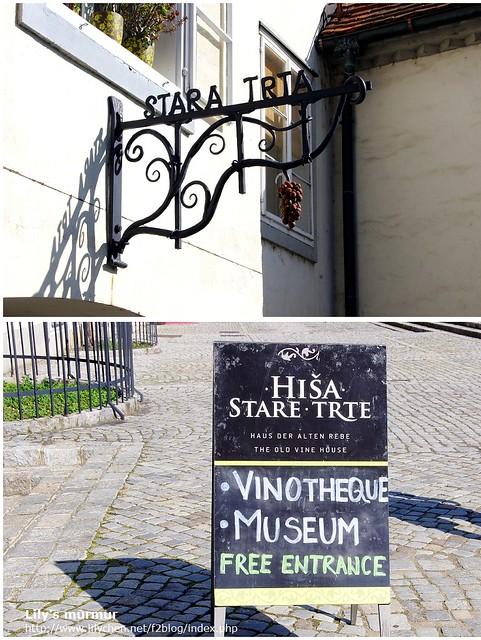 Maribor的Stara Trta以及葡萄酒博物館。