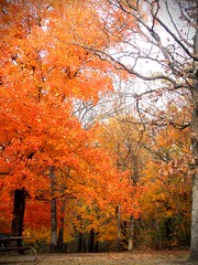 orange autumn