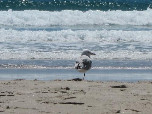 Poor one-legged seagull