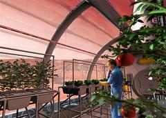 Invernaderos en Marte
