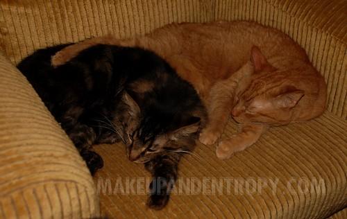 Duke and Charlie sleeping