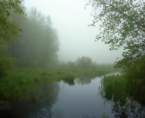 Beaver Pond Brook