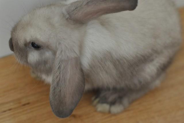 Thumper 3