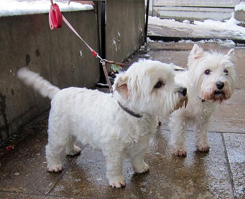 Bonnie & Gus Wait Anxiously!