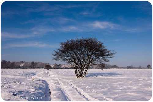 El árbol y el camino helado