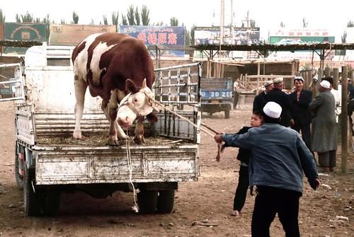 animal market