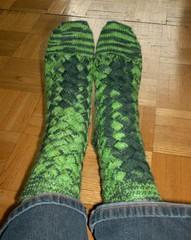 Crocodilian Socks - Complete
