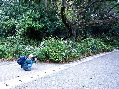 Flower garden in Japan