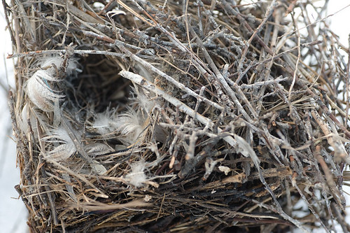 Spring is the time to clean out nest boxes