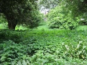 Vegetación, canal de Bonanza