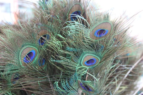 201102180794_peacock-feathers