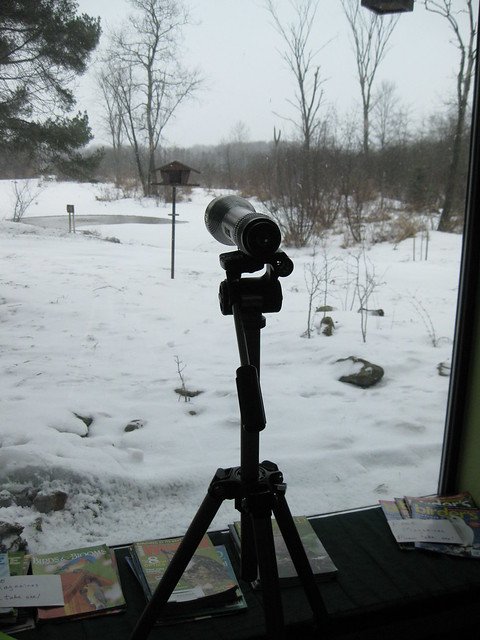 Spotting Scope aimed at Feeder