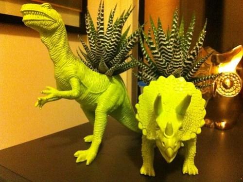 Dino plants.