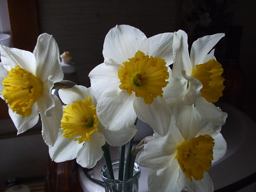 Fresh Picked Daffodils
