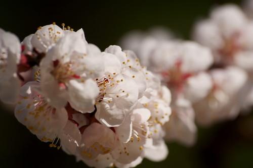 Finalmente primavera... by Miriam Farsetti 65