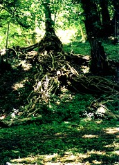 woodman by Aisselle A T Gabegie