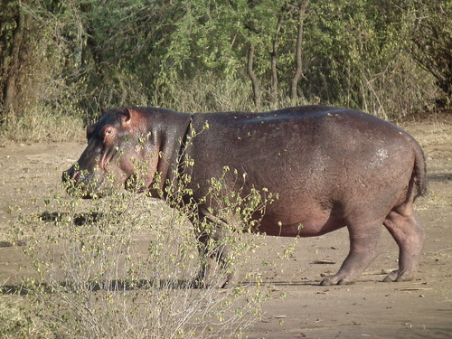Serengeti - Tanzanie 2011 (198)