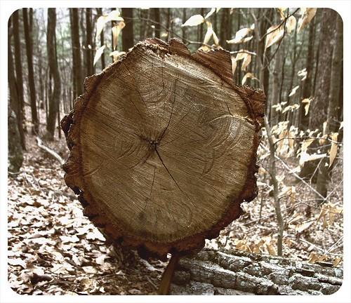 round perfect tree