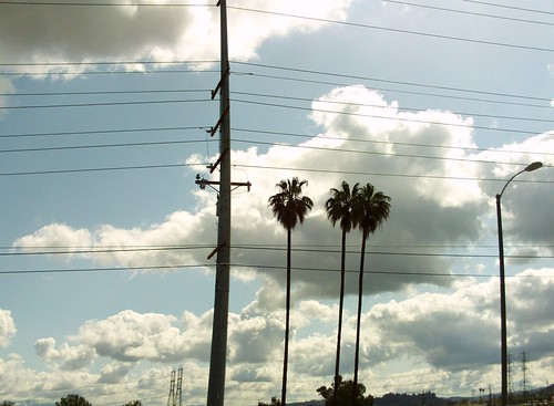 Southern California Palm Trees-1