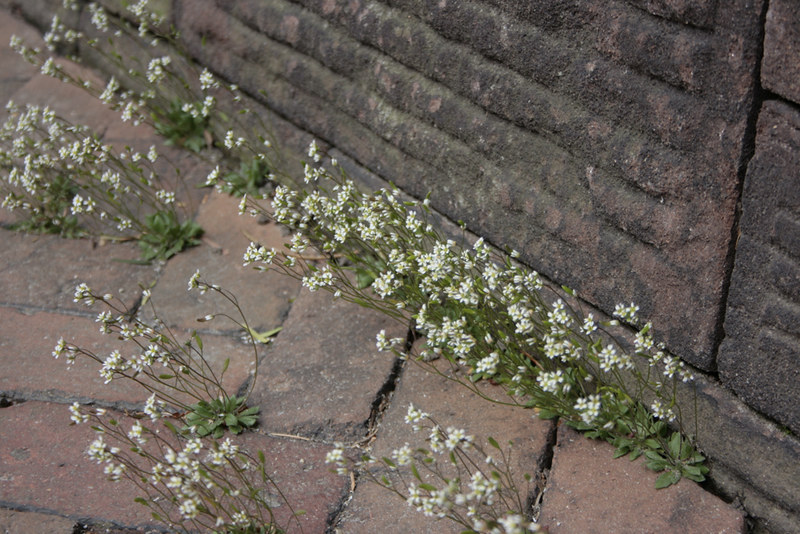 flowers&brick3