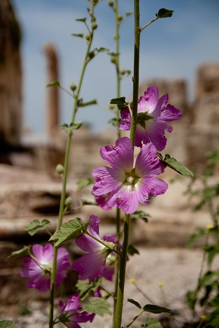flowers and ruins