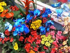 Macy's Flower Show