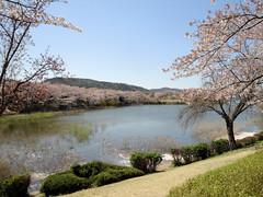 A nice spring day on Bomun Lake in Gyeongju