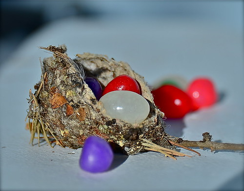 Hummingbird Nest by Shirley Buxton
