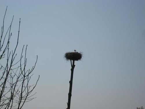 Stork & baby @ Betuwewandeling
