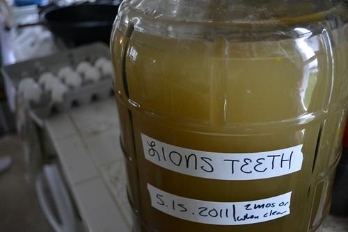 Ready to begin fermenting