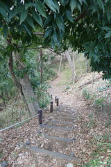 鴨居原市民の森(冒険の道、Kamoihara Community Woods)