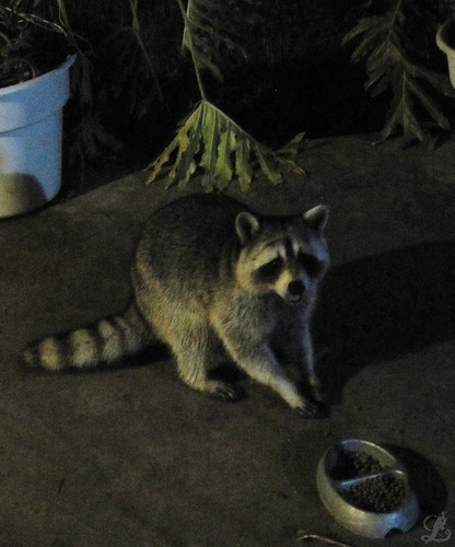 Midnight Visitor