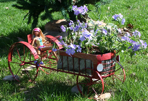 Cole and the Flower Cart