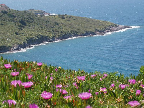 201104230047_helichrysum-flowers