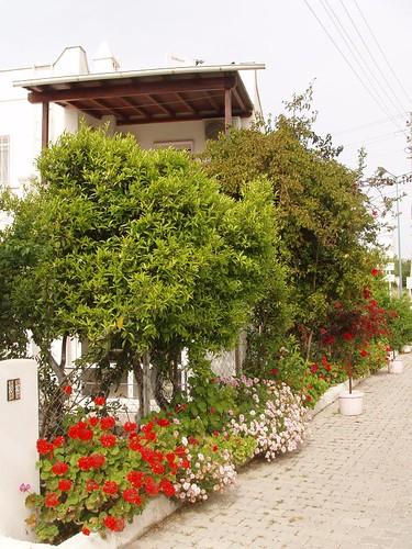 201105010088_colourful-garden