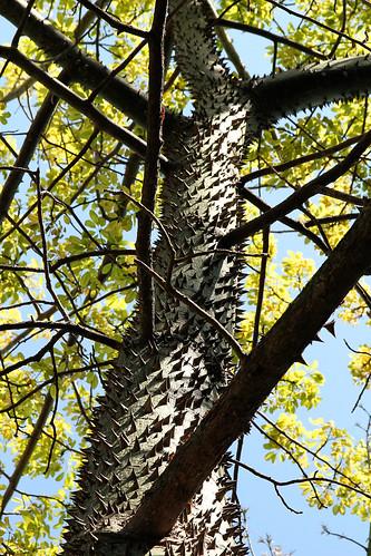Spiky-tree