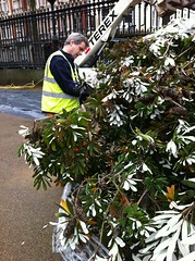 Kew's Richard Wilford at work