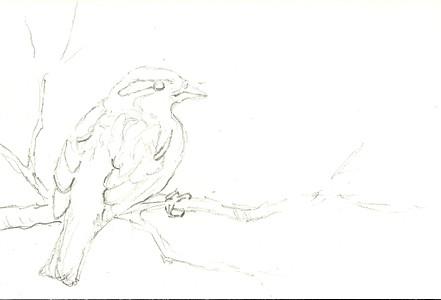 20110409_sparrow_step1