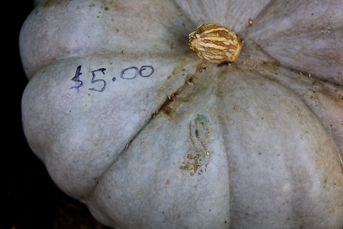 5 Dollar Pumpkin by BaboMike