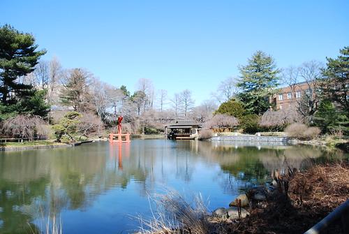 Botanical garden's pond in winter